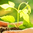 Sustentabilidade 001_02p