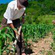 Trabalhador Rural 002